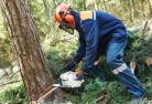 Aberfeldie Tree felling services 21