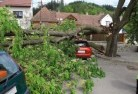 Aberfeldie Tree felling services 41